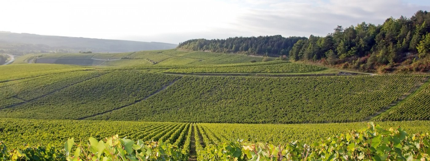 Roadtrip in Burgundy by campervan