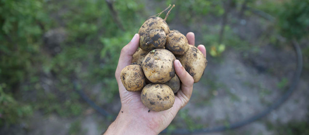 Good (farmers) kisses from Banpotoc